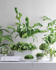 Minimalist design has never looked so lush, thanks to the abundant green leaves and white flowers in these refreshing arrangements.…