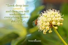 Look deep into nature, and then you will understand everything better. ~Albert Einstein