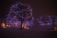 Each November through December, Menominee Park in Oshkosh is lit with half a million lights spread over a mile. Holiday Lights, Wisconsin, Christmas Holidays, Beautiful Places, November, Park, Fun, Travel, Christmas Vacation