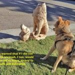 On-leash warning