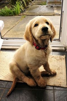 Golden Retriever Puppy By Kay Berry Baby Dogs Cute Animals