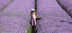 levendula-ultetese-es-gondozasa2 Lavender Fields, Lavender Flowers, Lavander, Color Lavanda, Skye Terrier, Cold Feet, Days Of The Year, Wisteria, Love People