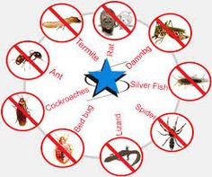 Call @ 99997875671. Mourier Pest Control Services in Gurgaon Fridges Pests with Immediate Effect