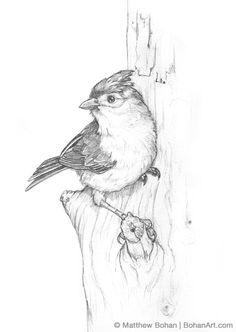 Bird Pencil Drawing, Bird Drawings, Pencil Art Drawings, Art Drawings Sketches, Animal Drawings, Cute Drawings, Drawing Birds, Sketches Of Birds, Pencil Sketching