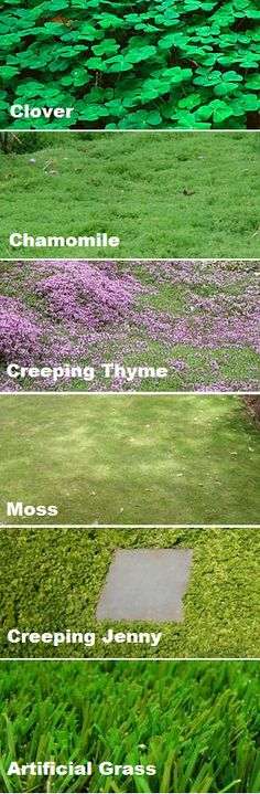 - Ground cover instead of a grass lawn! Better for bees, environment and utility b… Ground cover instead of a grass lawn! Better for bees, environment and utility bill! (SO pretty! No Grass Backyard, Backyard Landscaping, Backyard House, Landscaping Edging, Plantation, Garden Projects, Garden Ideas, Patio Ideas, Backyard Ideas