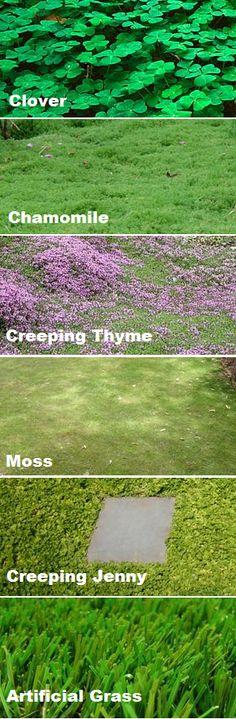 differentes couvre sols