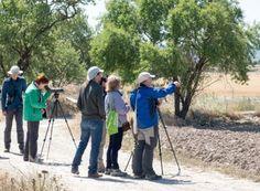 Avance del programa de actividades septiembre-diciembre 2015 del Grupo Local SEO-Barcelona: salidas ornitológicas, cursos, charlas, censos.