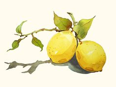 Watercolor Painting - Lemon Painting - Watercolor Lemon - 5 by 7 print - Archival Print, Minimalist, Home Decor, Garden Art