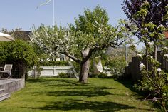 Tuinontwerp ideeën gras Small Courtyard Gardens, Small Courtyards, Backyard Garden Design, Patio Design, Patio Tiles, Garden Plants, Sidewalk, Tiny House, Outdoor