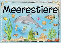 """Ideenreise: Themenplakat """"Meerestiere"""""""
