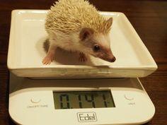 初の体重測定