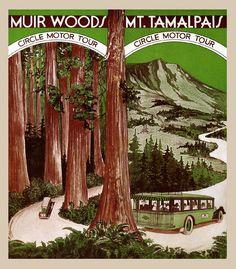 Redwood National Park Poster | Muir Woods National Park California Redwood Trees Vintage Poster Repro ...