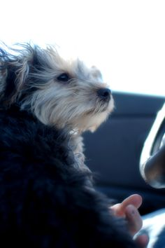 Cruising with PJ....makes me smile.