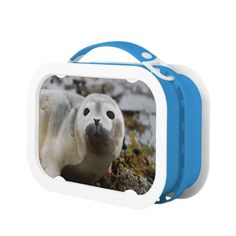 Shop Seal Pup Lunch Box created by WildlifeAnimals. Seal Pup, Lunch Box, Kids, Animals, Young Children, Children, Animaux, Kid, Animal