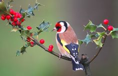 Visit our new-look Galleries to view and search images of thousands of bird species, and join our worldwide community of bird photographers Pretty Birds, Beautiful Birds, Animals Beautiful, Tropical Birds, Colorful Birds, Small Birds, Little Birds, World Birds, Australian Birds