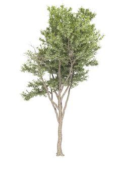 Tree_version free