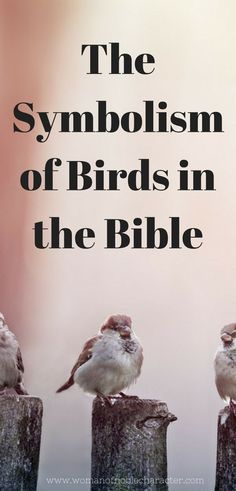 Birds in the Bible. A look at the symbolism of birds in His Word. Doves and sparrows in Scripture and their meaning with verses. #birds #Bible #symbolismintheBible #Biblesymbolism #birdsintheBible #sparrows #doves #Scripture #Christian #Christianity #Christianwoman #Christianwomen