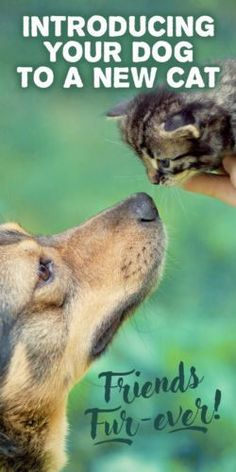 Who said dogs and cats can't get along? Not only can they live together peacefully, with the right introduction, dogs and cats can become the best of friends.