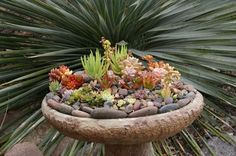 Bird bath converted to succulent container planter.