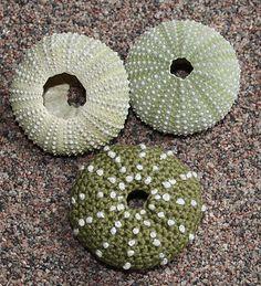Ravelry: Sea Urchins pattern by CAROcreated design