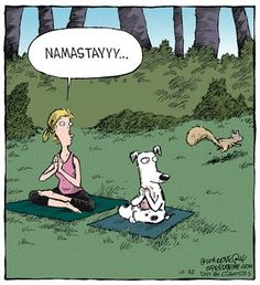 Today on Speed Bump - Comics by Dave Coverly Funny Dog Memes, Funny Dogs, Funny Animals, Yoga Meme, Yoga Humor, Yoga Jokes, Speed Bump Comic, Yoga Cartoon, Illustrations