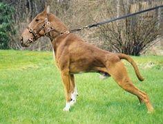 (2014-04) Dog + horse = dorse?