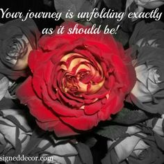 Food for Thought Friday – Inspirational Quotes – Your Journey!