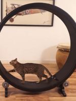 Save Your Fat Cat With This Kitty Hamster Wheel #refinery29
