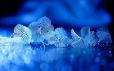 картинки в синем цвете: 19 тыс изображений найдено в Яндекс.Картинках
