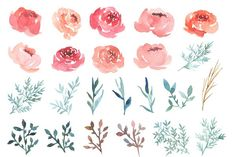 Watercolor Peonies - Illustrations