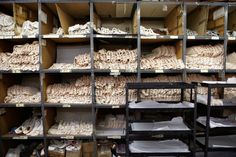 Freed_Factory- Satin and Calico blanks at the start of the manufacturing {pointe shoe} process -Patricia_Niven