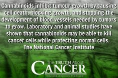 Cannabinoids inhibit tumour growth by causing cell death, blocking growth, and stopping the development of blood vessels needed by tumors to grow. Study after study shows that this is a miracle plant yet it is STILL not legal. Big Pharma can't own it so you're not allowed to have it. It's criminal! // The Truth About Cancer