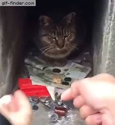 Meet the cat who knows how to protect its cash | Gif Finder – Find and Share funny animated gifs