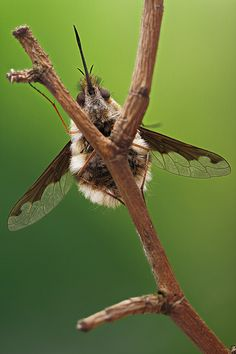 Staging insects - the method | This is the method I use for … | Flickr