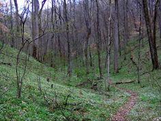 Highland-rim-trail-sp-tn1 - Edgar Evins State Park - Wikipedia, the free encyclopedia