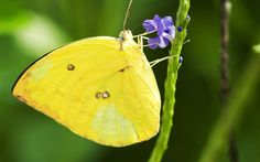butterfly close up - Google Search