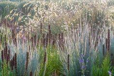 Linear, blue-grey grass - Schizachyrium scoparium 'Blue Heaven' http://www.shootgardening.co.uk/plant/schizachyrium-scoparium-blue-heaven …