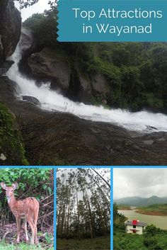 Top attractions in Wayanad, Kerala (India) which can be thoroughly enjoyed in the rains. #travel #monsoongetaways #kerela