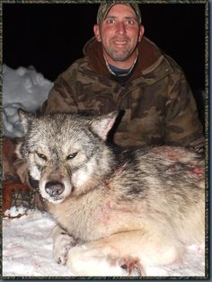 Ontario Wolf Hunting  Look at the eyes of this man.... he is addicted to kill, drunken with a false sense of omnipotence.  Instead he is only the typical wolf hunter: psychotic,  cruel and impotent.
