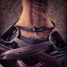 The season is upon us... No stirrup Novwmber😳🐴