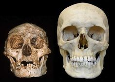 Humans Wiped Out the #Hobbit: New Study Suggests Homo Sapiens Caused Extinction of Tiny Homo #Floresiensis Species