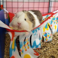 privacy curtain hammock from Guinea pig sanctuary