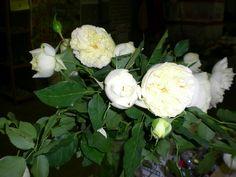 Garden Spray Rose Spray Roses, Garden Roses, Vegetables, Vegetable Recipes, Roses Garden, Veggies