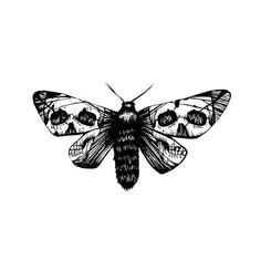 Moth with skull wings
