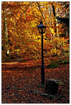 Narnia in the Fall? Once the spell of white witch was broken.
