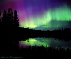 Aurora | WP03347 Aurora Borealis with reflection in lake and silhouette conifer ...