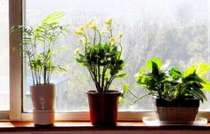 Aloe, Spider Plant, Gerber Daisy, Mother-in-law's tongue, and Golden Pothos are houseplants that can improve the air quality in your home.
