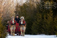 draft horses in the snow | For the Love of Horses | Pinterest