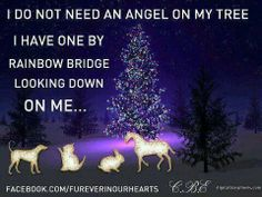 I do not need an angel on my tree, I have one by rainbow bridge looking down on me...