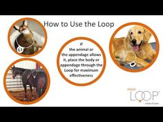 How to Use the Assisi Loop - YouTube